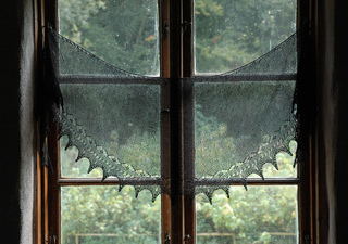 Starling_starlet_in_window_small2