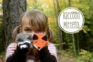 Raccoon_2_small2