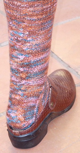 Staghorn_sock_medium