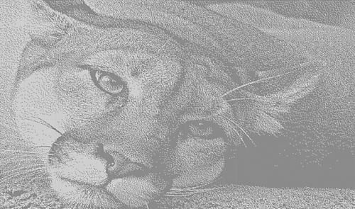 Panther336x570klein_medium