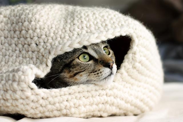 Cat Nest Crochet Pattern Free