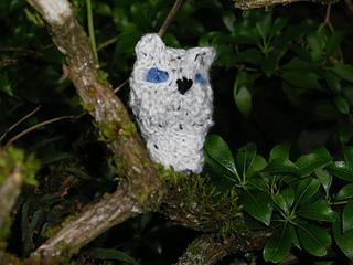 Oisin_owl_small2