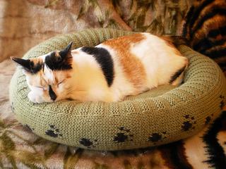 Dog_cat_bed_shiri_designs_02_11_main_small2