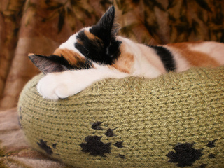 Dog_cat_bed_shiri_designs_02_11_closetuckered_small2