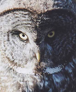 Can_you_see_the_hoot4_small2