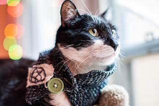 Punk_rawk_kitty_small2