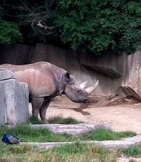 Rhino_2_small2