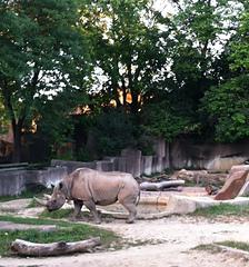 Rhino_small