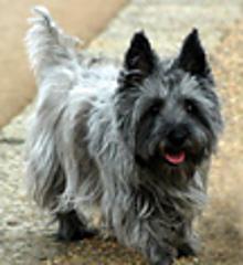Zoe-dog_small