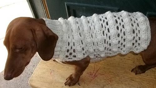Dog_sweater_and_girls_shrug_002_medium