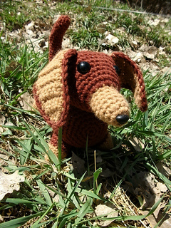 Brown_doxie_002_small2