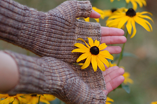 Sunflower_small2