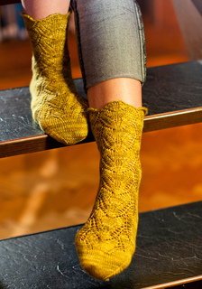 Polypodium_vulgare_sock_small2