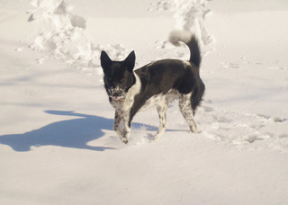 Luna_s_first_snow_1