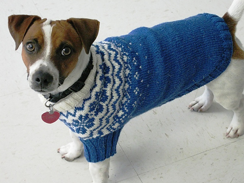 Knitting Pattern For Jack Russell Dog Coat : ??????? ??? ?????. ???????. - ??????? - ?????? ???