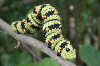 Caterpillar_004_small2