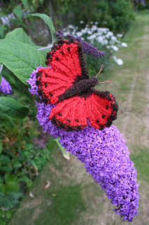 Butterfly_044_small2