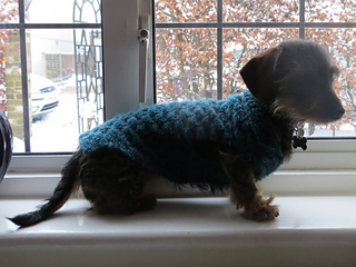 Battersea Dogs Home Knitting Pattern Dog Coat : Ravelry: Battersea Dogs & Cats Home - patterns