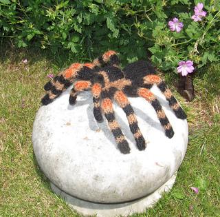 My_pet_tarantula1_small2