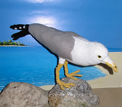 My_pet_seagull1_small