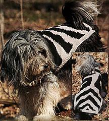 Zebra-dog_small