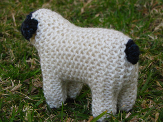 Sheep2_small2