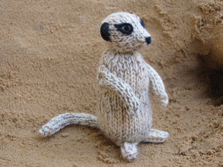 Meerkat_photos_0202_small2