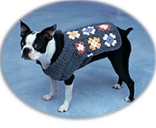 Dog_square-lg_small2