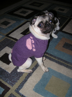 Izzy_s_sweater_small2