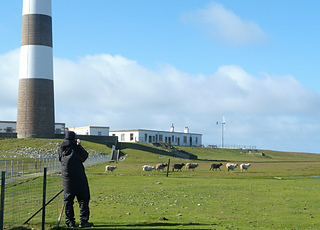 North_ronaldsay_sheep_and_lighthouse_h3_small2