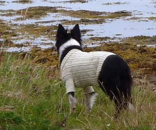 Sea_dog_gansey02_small2