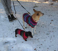 Dogs14_small