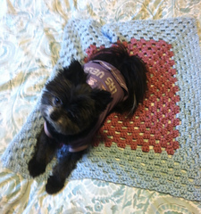 Puppy_blanket_small