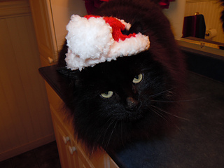 Santa_claws_012_small2