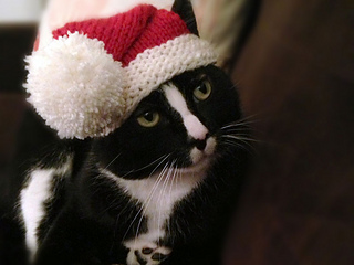 Santa-claws-1_small2